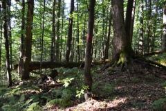 Exkurzia so sprievodcom k Dobročskému pralesu počas letných prázdnin 2015